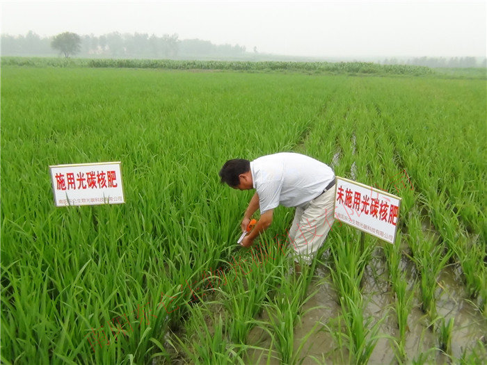 技术人员深入田间观察测量水稻长势