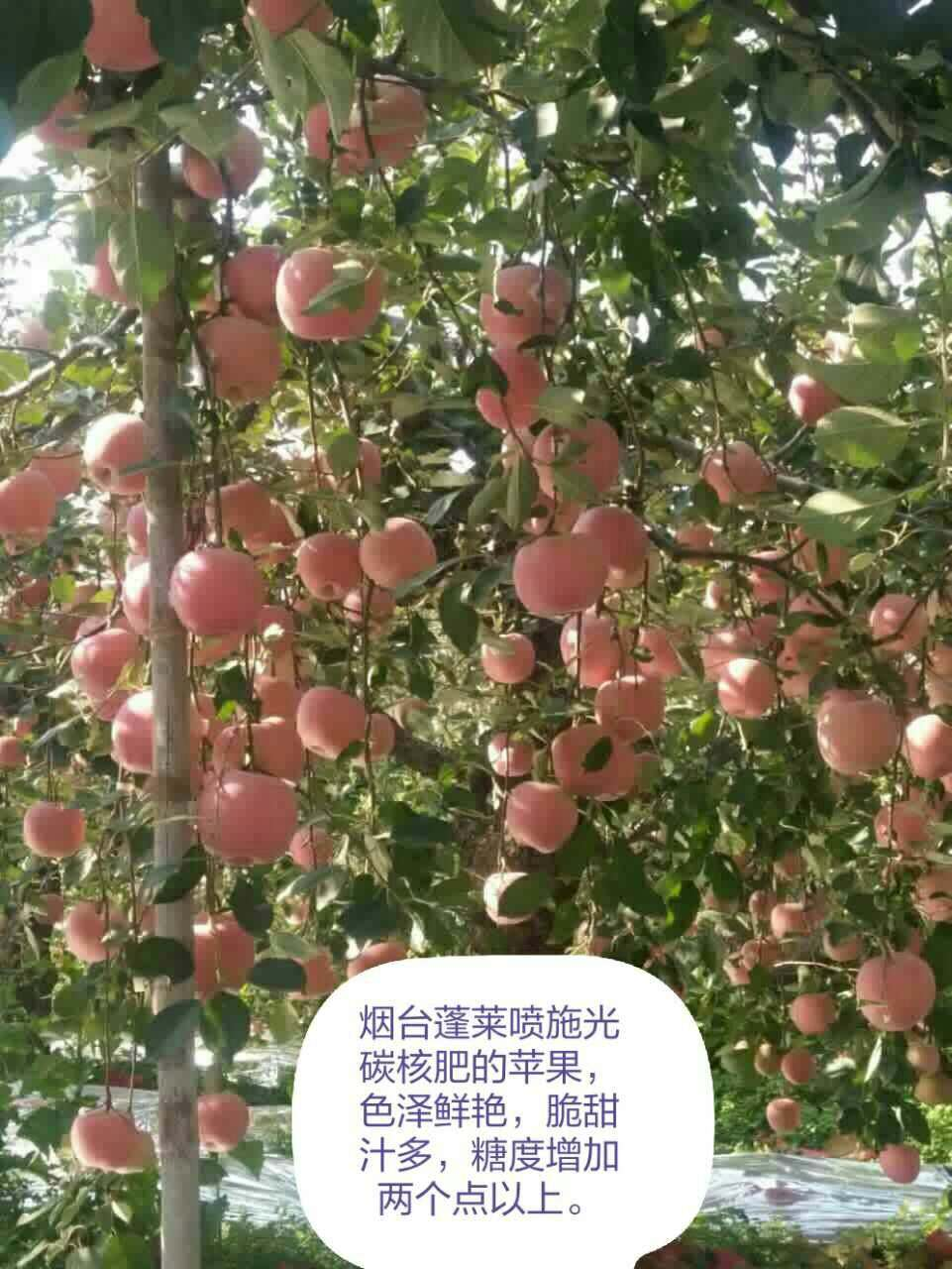 星空彩票官方ios苹果Delicious gonton apple